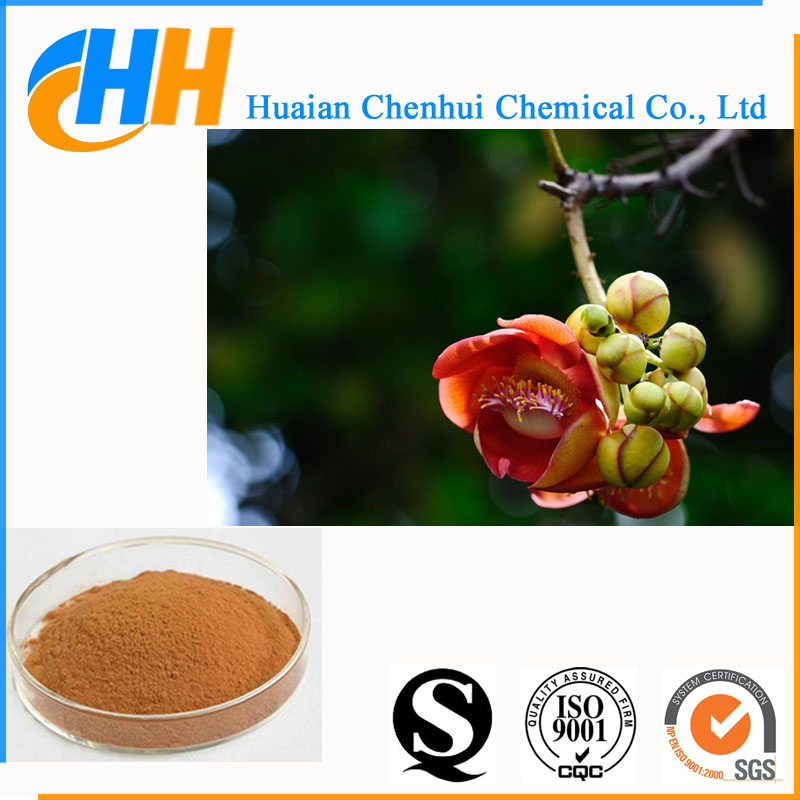 100% Natural Tilia Vulgaris, Lime Flower Extract Powder 10:1 20:1