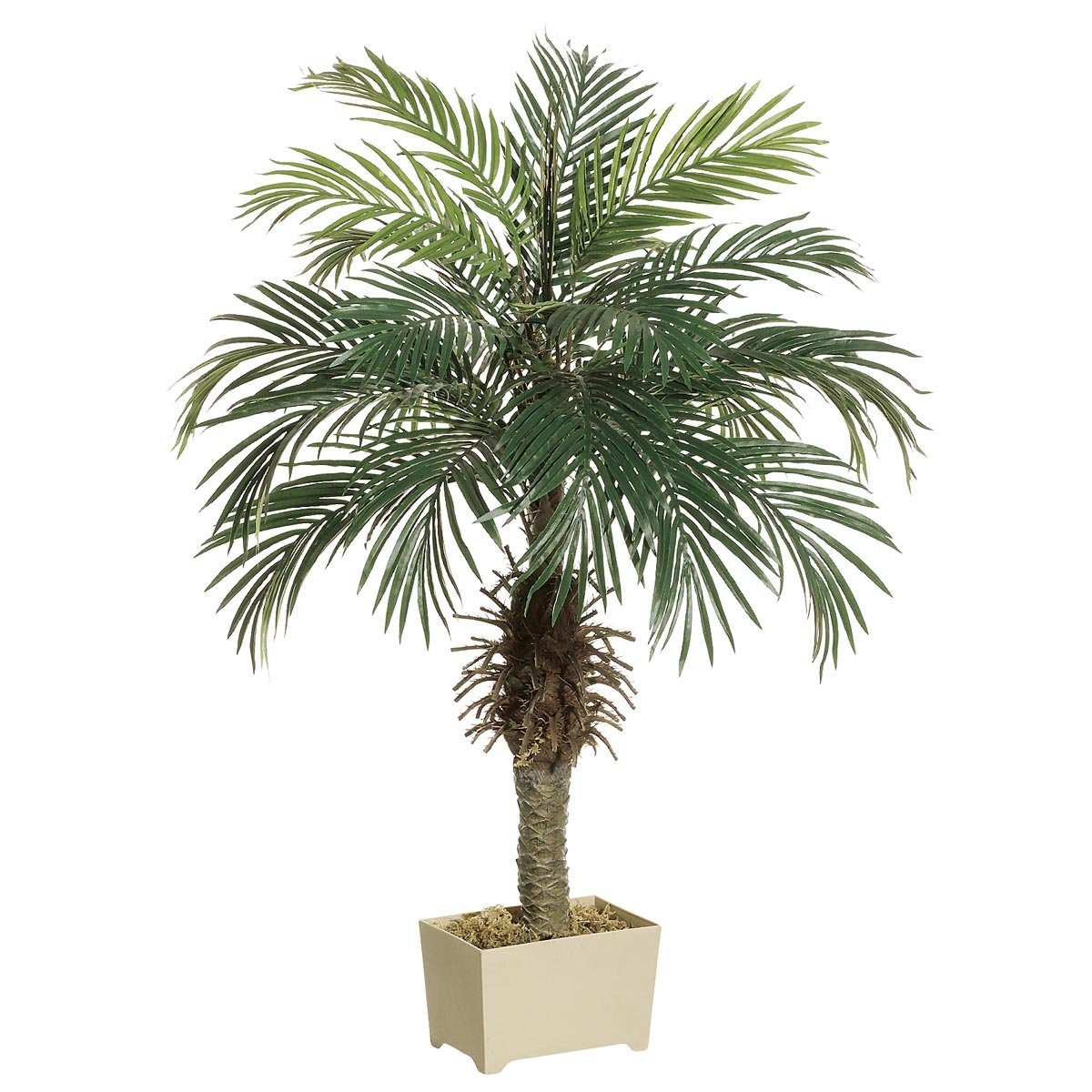 4' Phoenix Palm Tree in Rectangular Plastic Pot (Pack of 2)