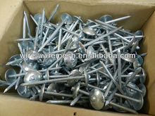 Umbrella Head Roofing Nail (ISO9001/14001/SGS)
