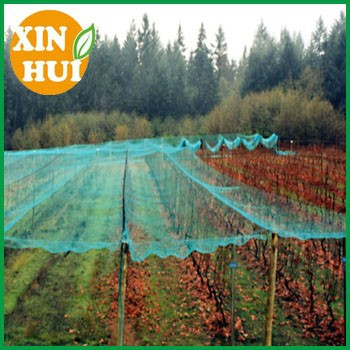 hot selling Crop protection Orchard knotted mesh anti bird net