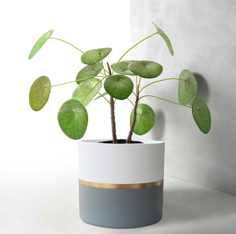 White Ceramic Flower Pot Garden Planters 65 Pack 2 Indoorplant