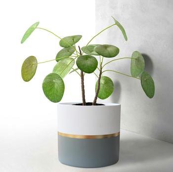 White Ceramic Flower Pot Garden Planters 6.5u0026quot; Pack 2 Indoor Plant  Containers White Ceramic Plant