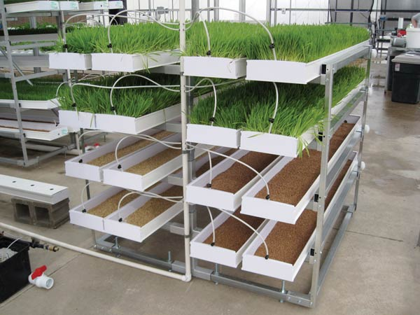 how to grow small commercial microgreens pdf