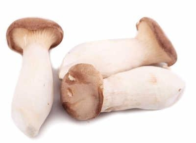 Hot Sale-Brined Pleurotus Eryngii / King Oyster Mushroom in brine