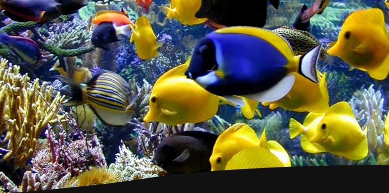 Marine Aquarium Fish | India Marine Aquarium Fish India Marine Aquarium Fish Manufacturers