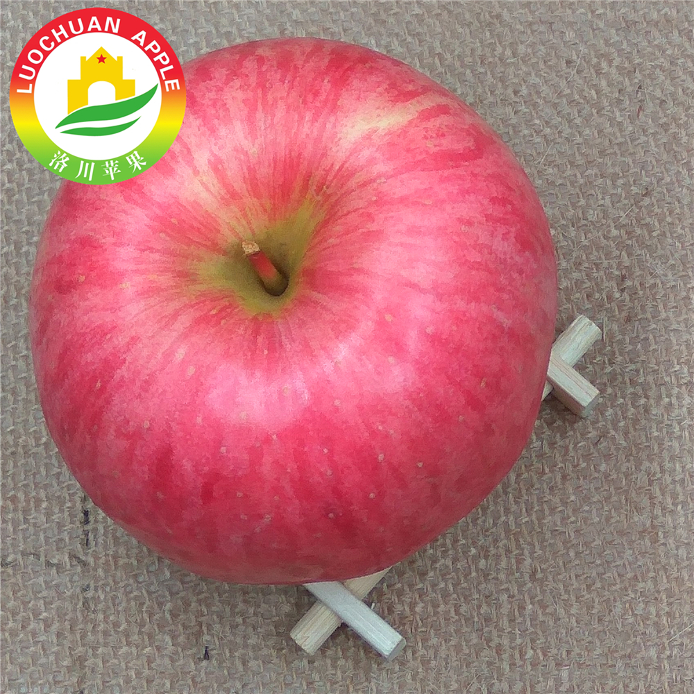 Grade A brand Luochuan Fuji apples fresh apple chinese supplier