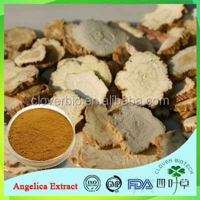 2016 wholesale low price Angelica sinensis Extract /dong quai extract powder