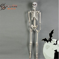 High simulation human body 170cm plastic Skeleton for halloween