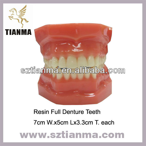 Custom Teeth Model Acrylic Denture Teeth Factory
