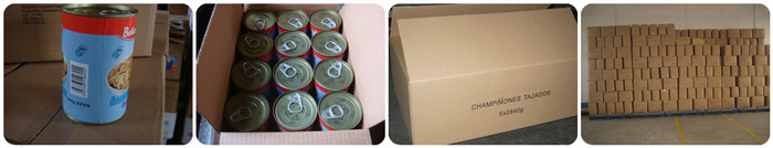 canned broad beans Yichang supplier