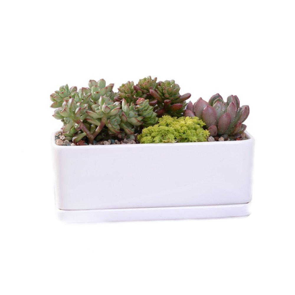 White Ceramic Rectangular Flower Pot,6.5 inch Modern Minimalist White Ceramic Succulent Planter Pot/Container with Ceramic Tray