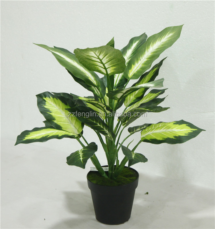 Cheap Plants That Grow Fast: Cheap Wholesale Outdoor /indoor Decorative Potted Plant