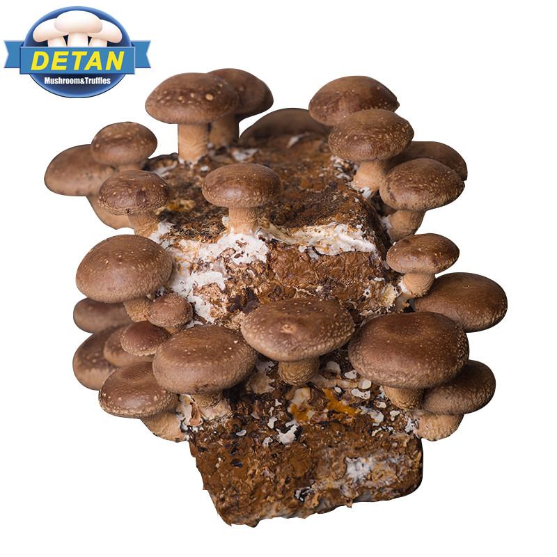China mushroom spores wholesale 🇨🇳 - Alibaba
