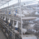 Factory supply Commercial Rabbit Breeding Cages