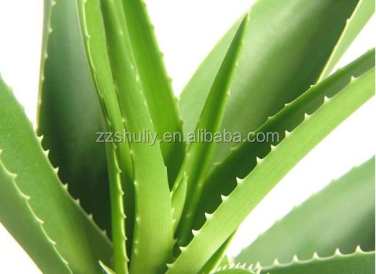 Aloe vera planta de procesamiento aloe vera peeling machine m quina peladora de aloe m quinas de - Planta de aloe vera precio ...