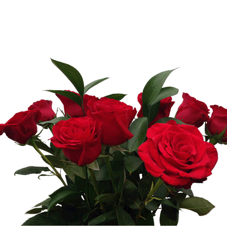 Alibaba supplier wholesales flower rose pic latest products in market