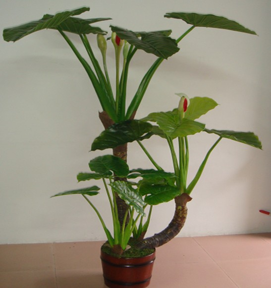 New arrival large leaf indoor plants for decoration 2014 buy large leaf indoor plants large - Big leaf indoor plants ...