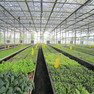 Anti-fogging cheap greenhouse cover agricultural cheap greenhouses used sale