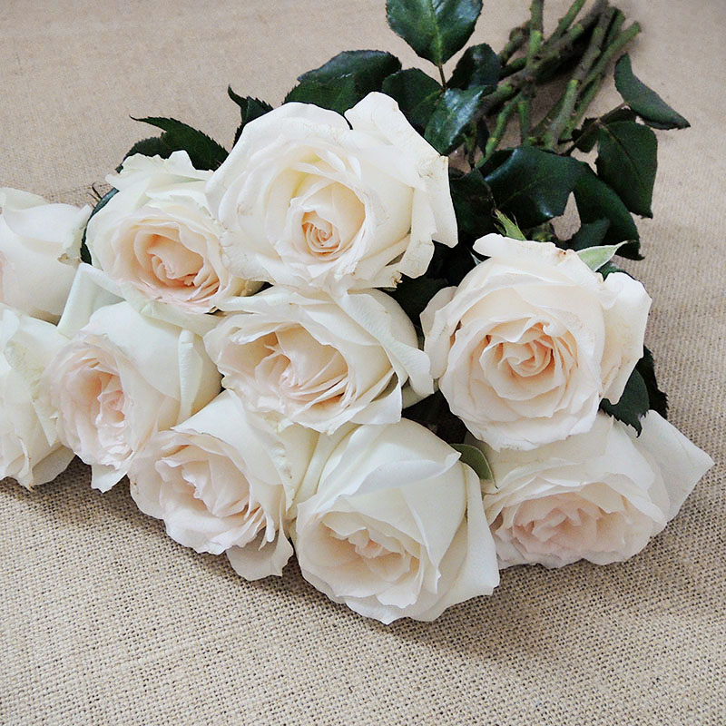 Pictures Of Different Types Of White Roses Kidskunstfo