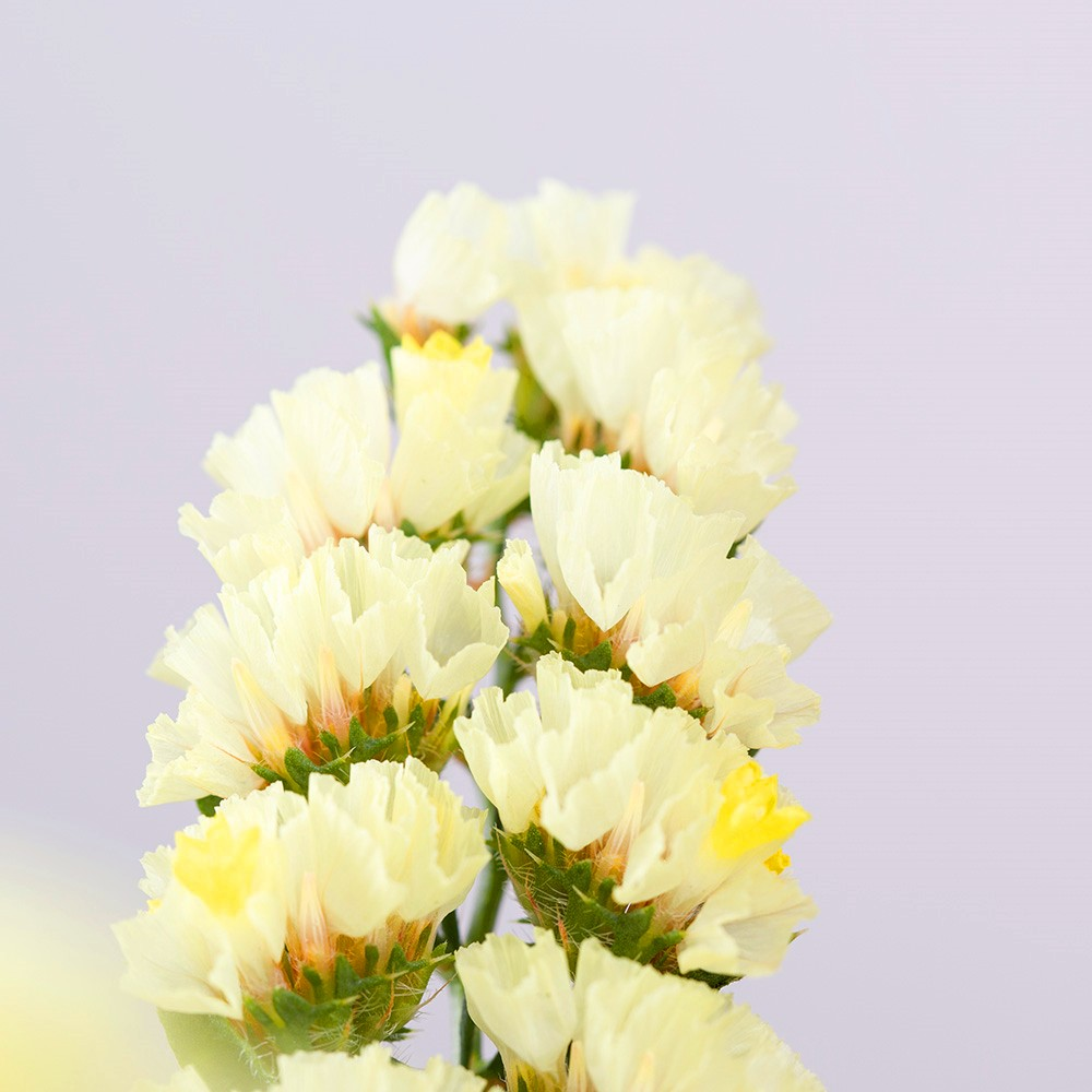 Ordinare Fiori.Hongri Freschi Recisi Rosa Myosotis Sylvatica Fiori Da Kunming