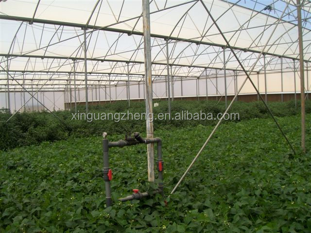 Multi Span Commercial Agricultural Glass Greenhouse