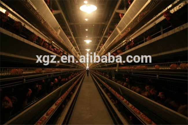 design poultry and layer egg chicken cage