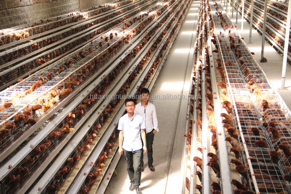 Design Of Commercial Chicken Houses Home Design And Style