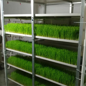 High Quality Cheapest Price Hydroponic Fodder System with PVC tray