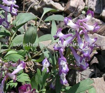 Natural herb plant High quality Manufacturer rhizoma corydalis yanhusuo extract Tetrahydropalmatine80% by UV