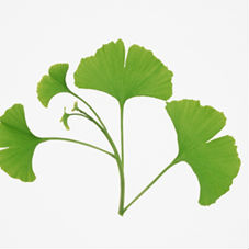 High quality Ginkgo Biloba Extract CP2010