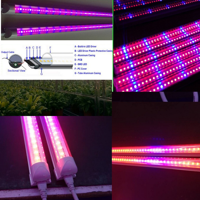 T8 60cm Plant Tube Grow Lights Grow Lettuce Plants Factory Indoor ...