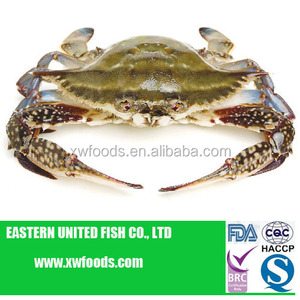 Frozen blue swimming crab whole round
