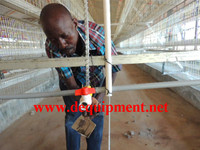 Factory layer and broiler feeding project chicken farm layer cages for sale in zimbabwe