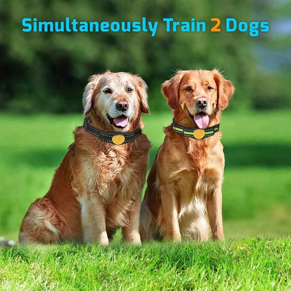 320 2 dogS.jpg