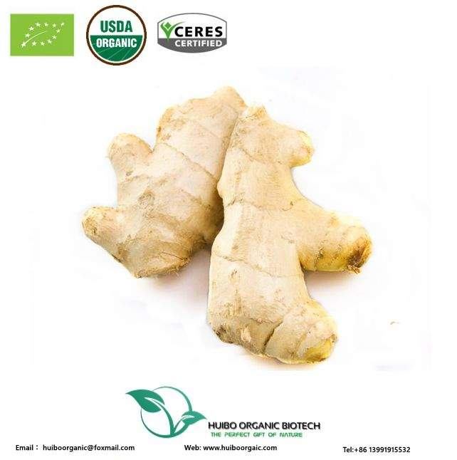 Organic ginger root powder lower than ginger market price