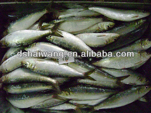 frozen sardine for tuna bait 110 pcs