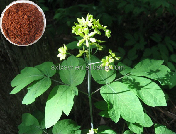 Hot selling plant extract hot-sale 100%natural epimedium extract powder