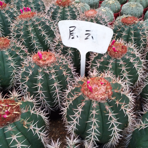 All Types of Cactus plants