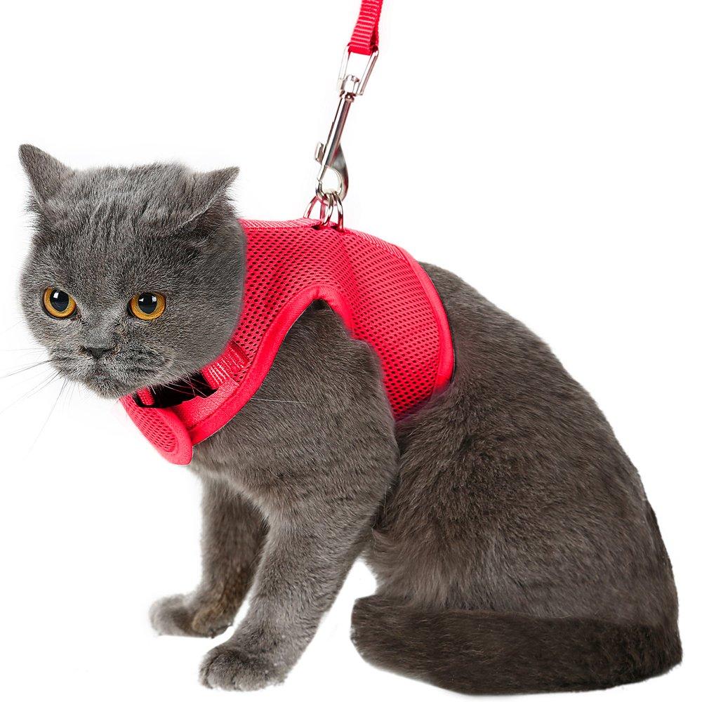 поводок для котов картинки горем отец перевозит
