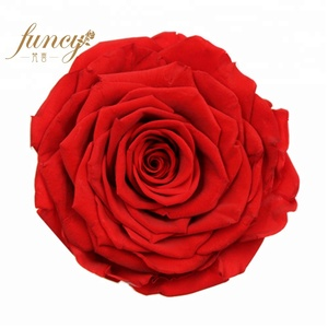 2019 Valentine Romantic Gift Preserved Eternal Blue Head Rose Only