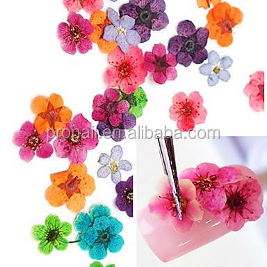 Getrocknete Blüten großhandel nageldekoration getrocknete blüten kaufen sie die besten