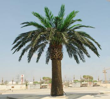 palmier m&s