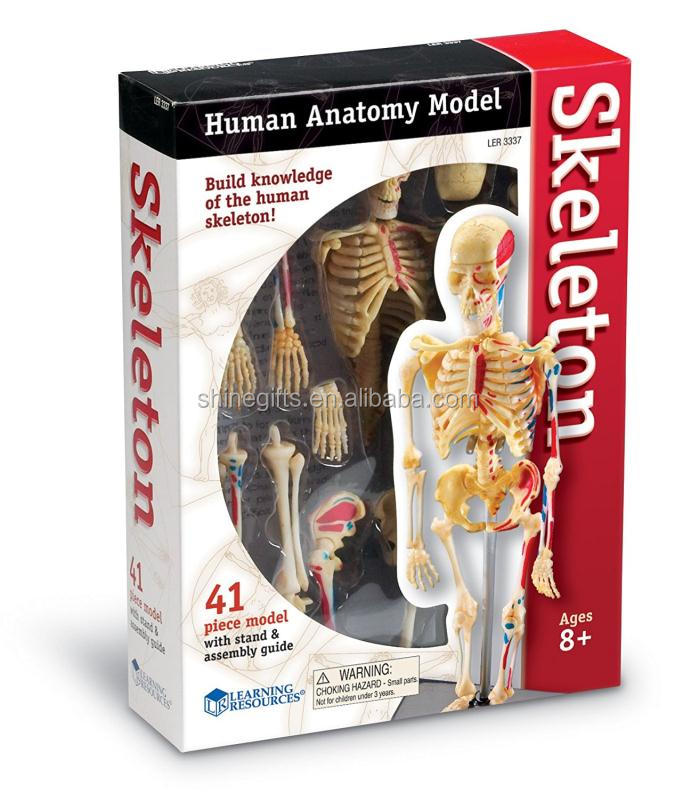 Kids Educational Toys Human Anatomy Model Skeleton Buy Skeleton