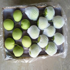 2017 Fresh Asian Pear Ya Pear Type with Wholesales Price