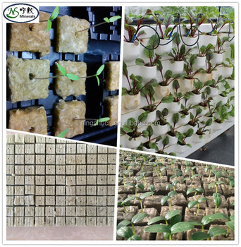 how to start seeds in rockwool cubes