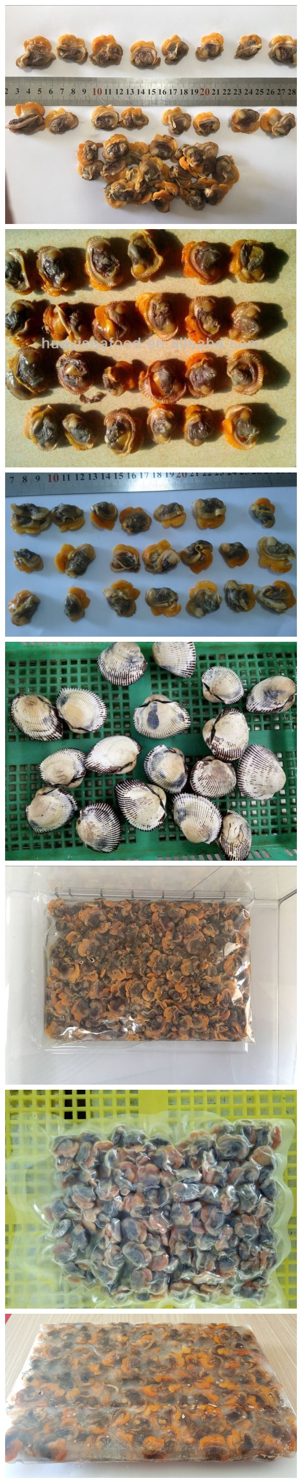 Chinese Organic Fresh Frozen Boiled Blood Clam for Importer
