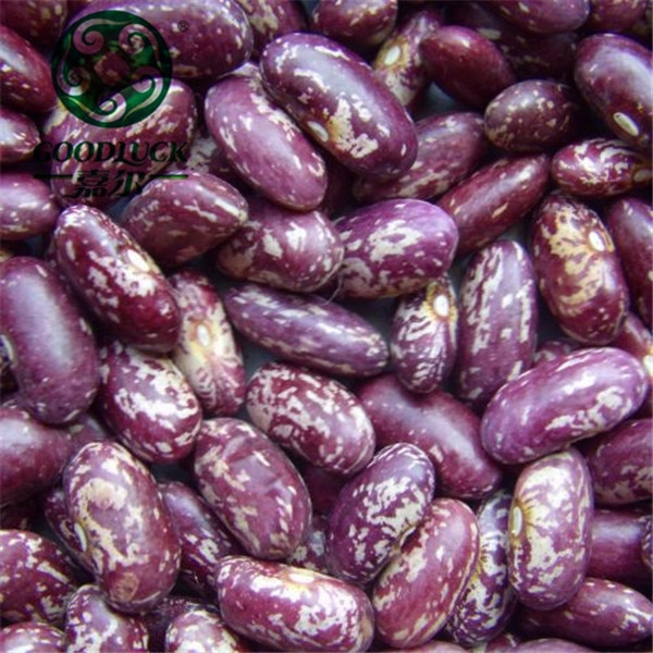 New Crop Dark Purple Speckled Kideny Beans Pinto Beans Price