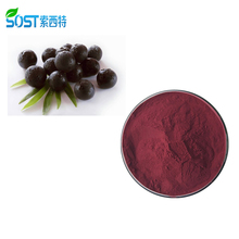 Tinh khiết Hữu Cơ <span class=keywords><strong>Acai</strong></span> Berry Chiết Xuất <span class=keywords><strong>Đóng</strong></span> <span class=keywords><strong>Băng</strong></span> <span class=keywords><strong>Khô</strong></span> <span class=keywords><strong>Acai</strong></span> <span class=keywords><strong>Bột</strong></span>