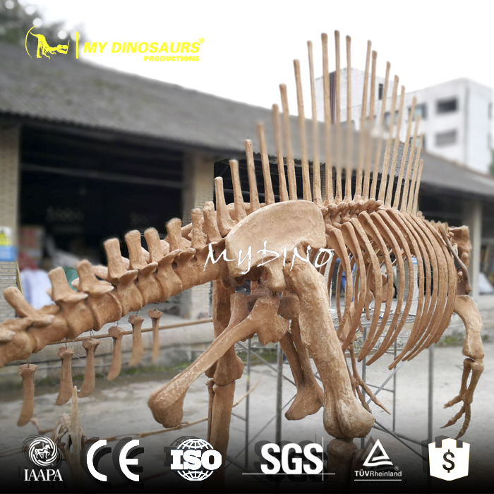 MY DINO-DSS039 Life Size Spinosaurus Skeleton Fossil