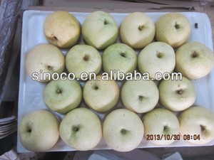 Chinese Gold pear,pear varieties